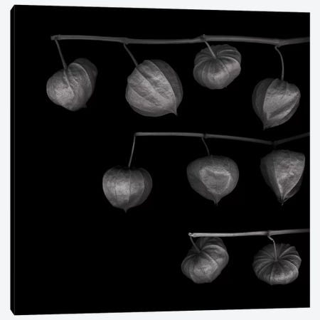 Lampion XVI, B&W Canvas Print #MAG135} by Magda Indigo Canvas Print