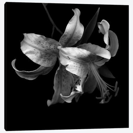 Lily I, B&W Canvas Print #MAG137} by Magda Indigo Canvas Print