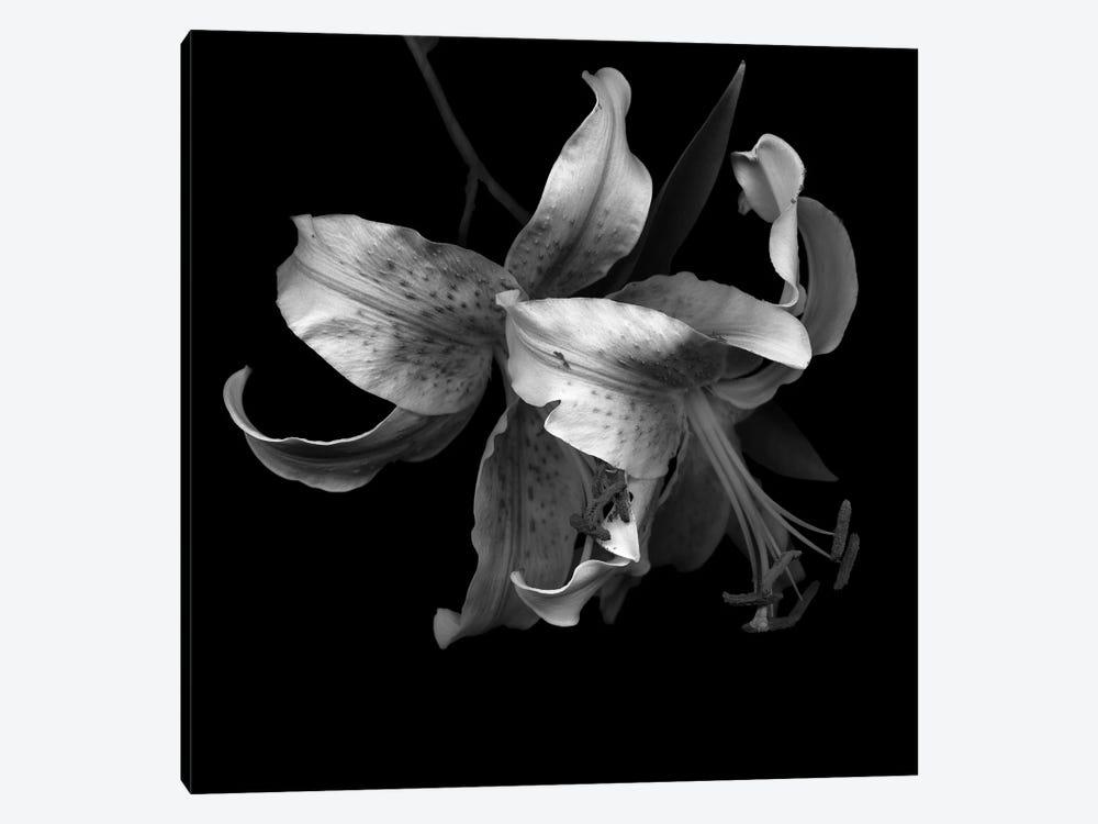 Lily I, B&W by Magda Indigo 1-piece Canvas Print
