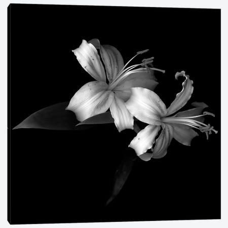 Lily V, B&W Canvas Print #MAG138} by Magda Indigo Canvas Artwork