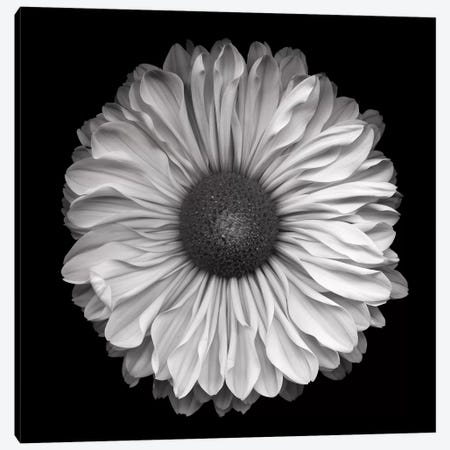Mum Special III, B&W Canvas Print #MAG145} by Magda Indigo Canvas Art