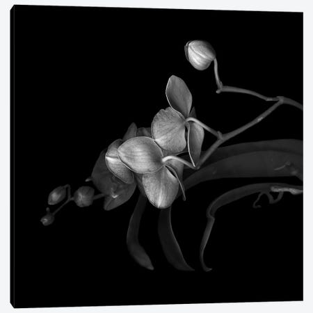 Orchid Purple, B&W Canvas Print #MAG146} by Magda Indigo Canvas Art