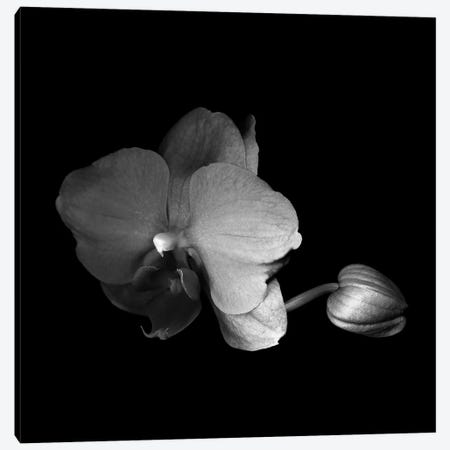 Orchid VI, B&W Canvas Print #MAG147} by Magda Indigo Canvas Artwork