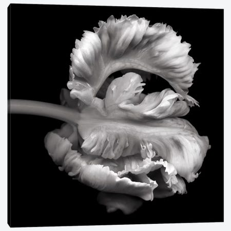 Parrot Tulips XVI, B&W Canvas Print #MAG148} by Magda Indigo Canvas Print