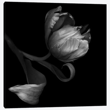 Parrot Tulips XXI, B&W Canvas Print #MAG149} by Magda Indigo Canvas Art Print