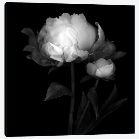 Peonies III, B&W 3-Piece Canvas #MAG150} by Magda Indigo Canvas Artwork