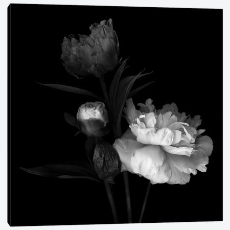 Peony Mix, B&W Canvas Print #MAG152} by Magda Indigo Canvas Wall Art