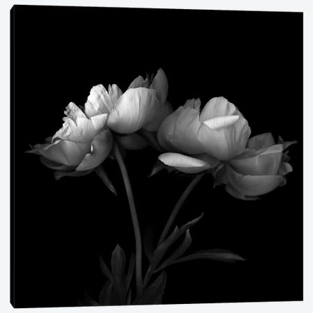 Peony V, B&W Canvas Print #MAG153} by Magda Indigo Canvas Wall Art