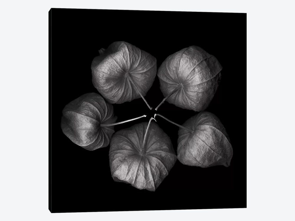 Physalis V, B&W 1-piece Canvas Wall Art