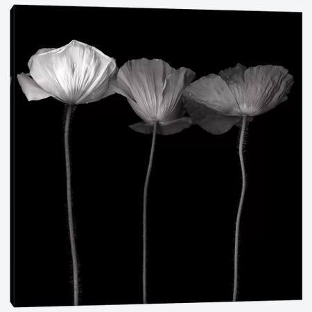 Poppy VI, B&W Canvas Print #MAG160} by Magda Indigo Canvas Print