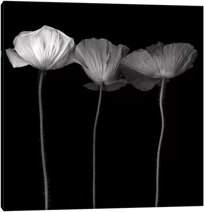 Poppy VI, B&W Canvas Art Print
