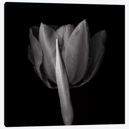 Red Tulips IV, B&W Canvas Print #MAG163} by Magda Indigo Canvas Art Print