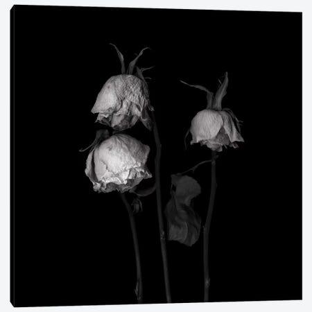 Rose Mix XXII, B&W Canvas Print #MAG165} by Magda Indigo Canvas Art