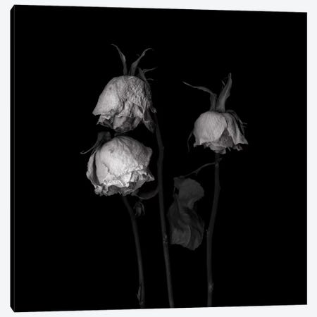 Rose Mix XXII, B&W 3-Piece Canvas #MAG165} by Magda Indigo Canvas Art