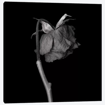 Rose Mix XXIV, B&W Canvas Print #MAG166} by Magda Indigo Canvas Artwork