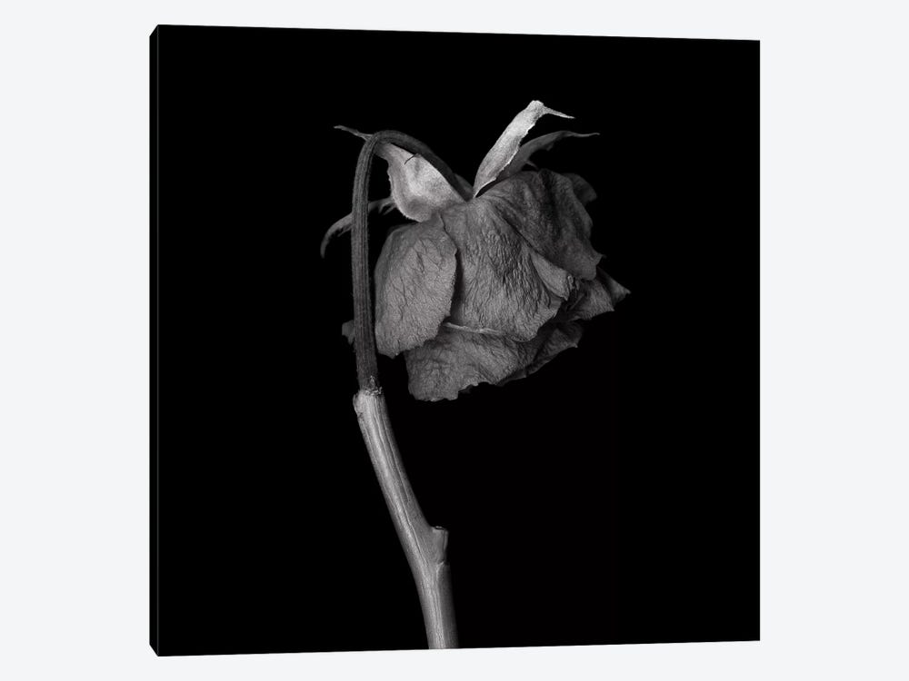 Rose Mix XXIV, B&W by Magda Indigo 1-piece Art Print