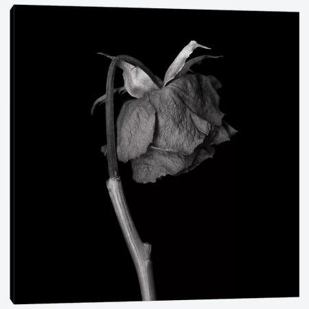 Rose Mix XXIV, B&W Canvas Print #MAG166} by Magda Indigo Canvas Artwork