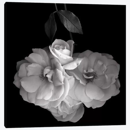 Rose White XVI, B&W Canvas Print #MAG169} by Magda Indigo Art Print
