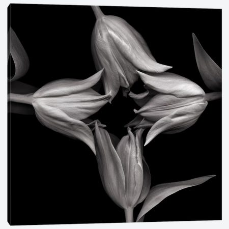 Star Tulips XI, B&W Canvas Print #MAG173} by Magda Indigo Canvas Artwork