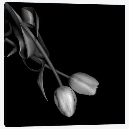 Tulip II, B&W Canvas Print #MAG174} by Magda Indigo Art Print