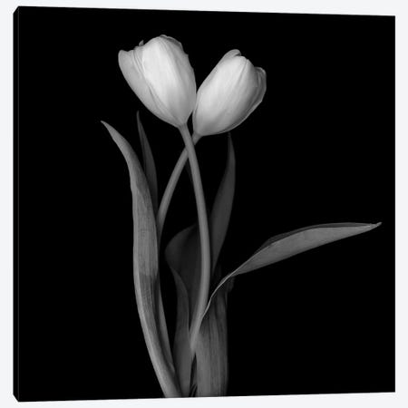 Tulip White I, B&W Canvas Print #MAG176} by Magda Indigo Canvas Art Print