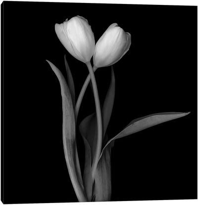 Tulip White I, B&W Canvas Art Print
