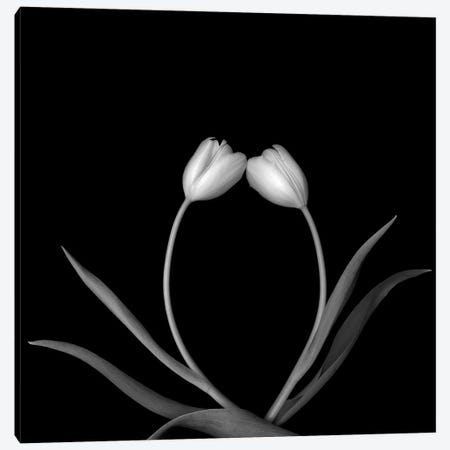Tulip White II, B&W 3-Piece Canvas #MAG177} by Magda Indigo Art Print