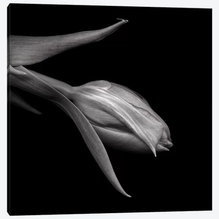 Tulips Red XI, B&W Canvas Print #MAG178} by Magda Indigo Canvas Art