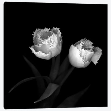 Tulips XI, B&W Canvas Print #MAG179} by Magda Indigo Canvas Artwork