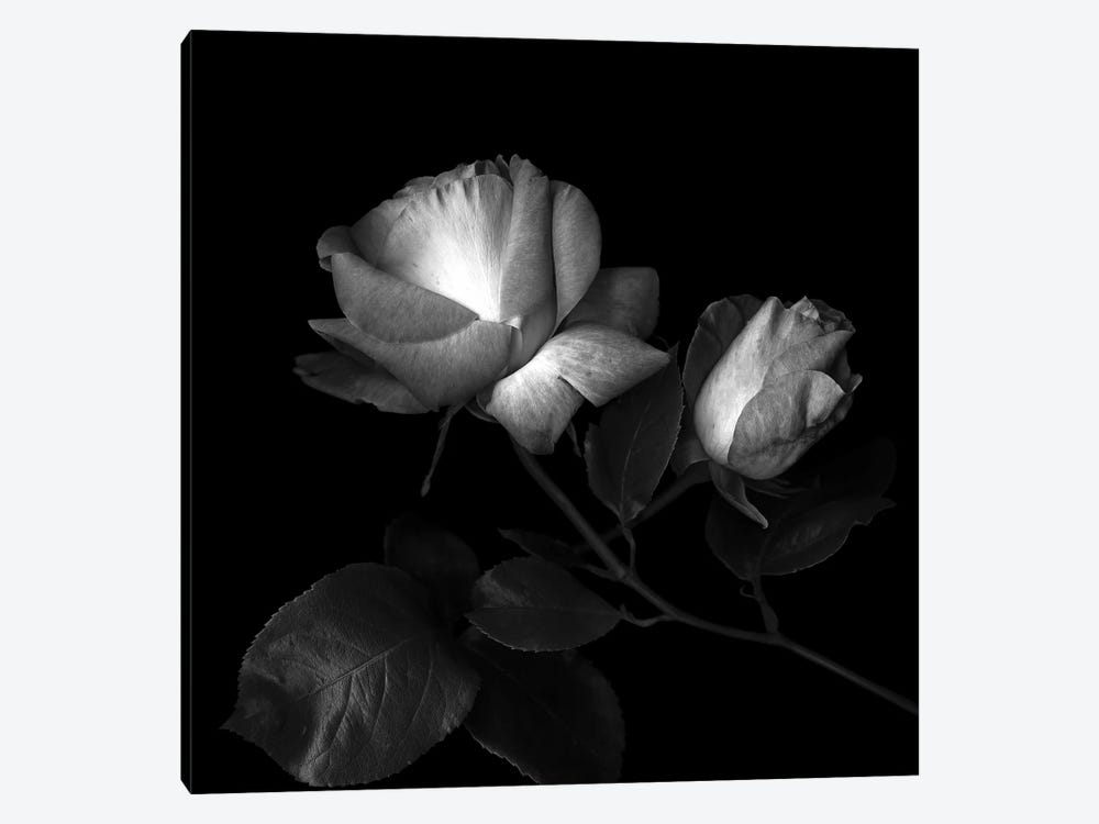 Two Roses Two Tones, B&W by Magda Indigo 1-piece Art Print