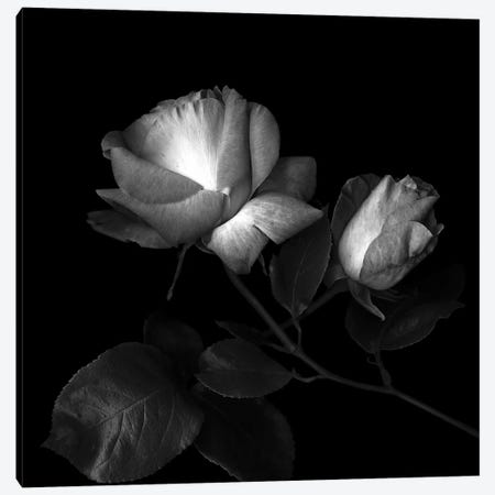 Two Roses Two Tones, B&W Canvas Print #MAG180} by Magda Indigo Canvas Print