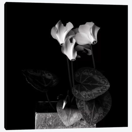 White Cyclamen IV, B&W Canvas Print #MAG182} by Magda Indigo Art Print