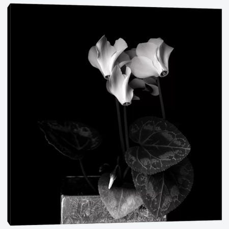 White Cyclamen IV, B&W Canvas Print #MAG182} by Magda Indigo Art Print