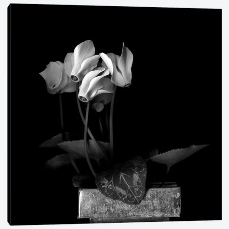 White Cyclamen V, B&W Canvas Print #MAG183} by Magda Indigo Art Print