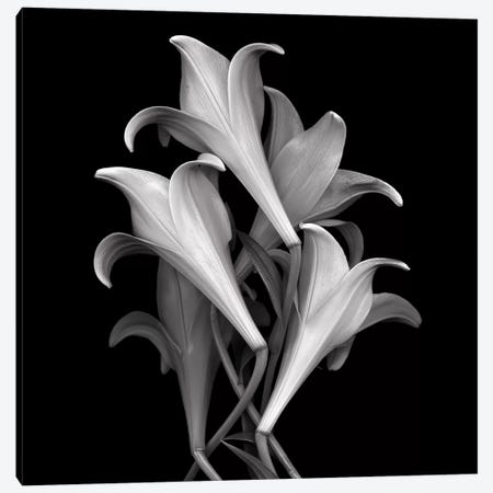 White Lillies, B&W Canvas Print #MAG184} by Magda Indigo Canvas Artwork