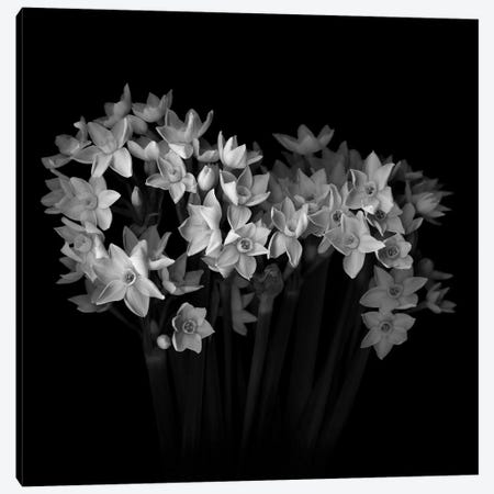 White Narcisi I, B&W Canvas Print #MAG185} by Magda Indigo Canvas Wall Art