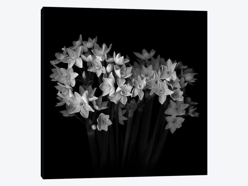 White Narcisi I, B&W by Magda Indigo 1-piece Canvas Artwork