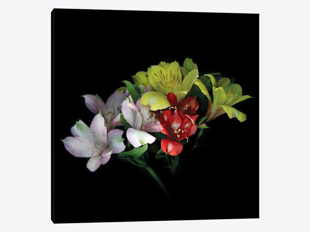 Alstroemeria Mix III 1-piece Canvas Wall Art