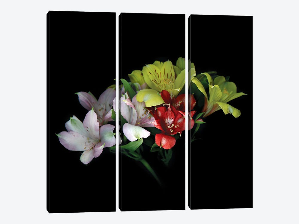 Alstroemeria Mix III 3-piece Canvas Art