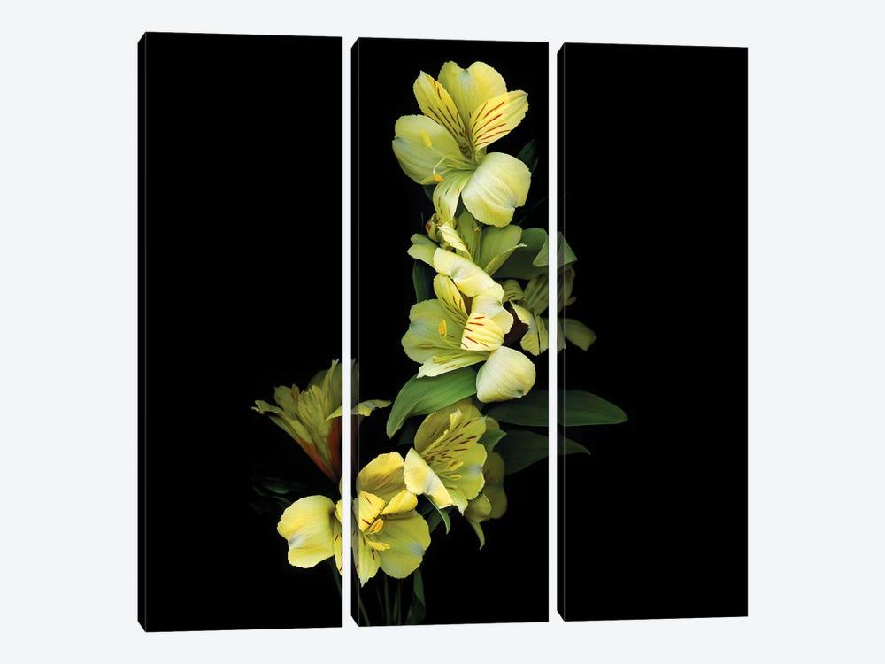 Alstroemeria Yellow IX by Magda Indigo 3-piece Canvas Artwork