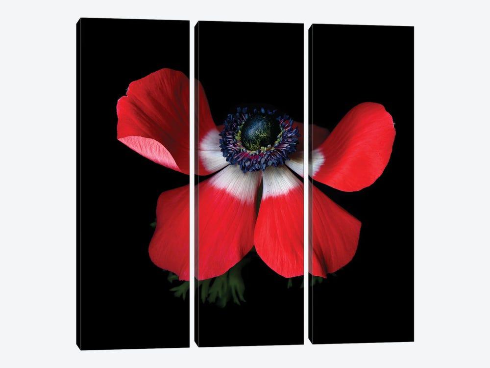 Anemone Red IV by Magda Indigo 3-piece Canvas Artwork