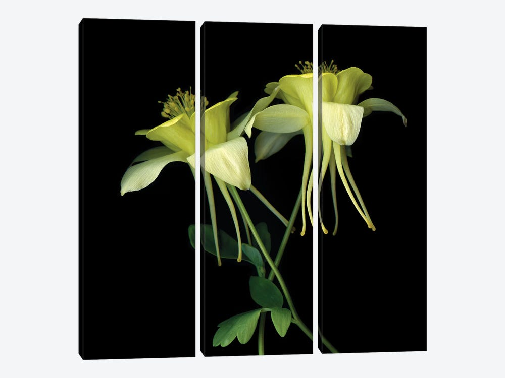 Aquilegia XV by Magda Indigo 3-piece Canvas Artwork