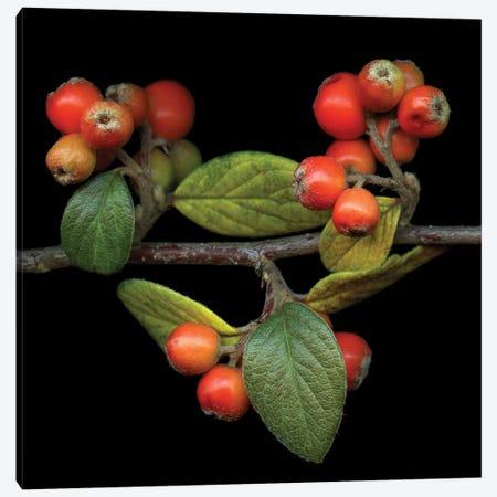 Berries XIV 3-Piece Canvas #MAG209} by Magda Indigo Canvas Artwork