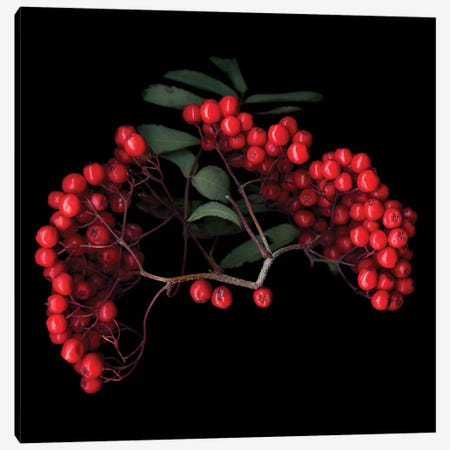 Berries III 3-Piece Canvas #MAG210} by Magda Indigo Art Print