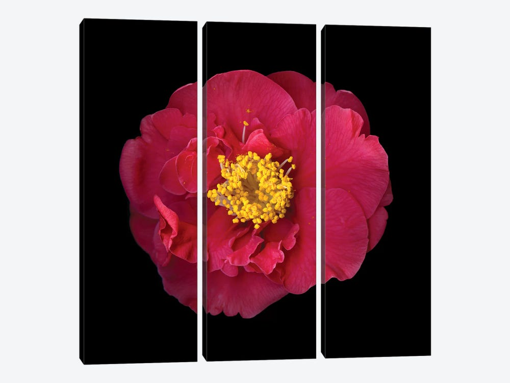 Camelia I by Magda Indigo 3-piece Canvas Wall Art