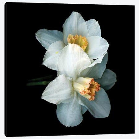 Daffodil Special V Canvas Print #MAG221} by Magda Indigo Canvas Art