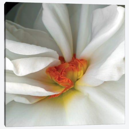 Daffodil Special VI 3-Piece Canvas #MAG222} by Magda Indigo Canvas Art