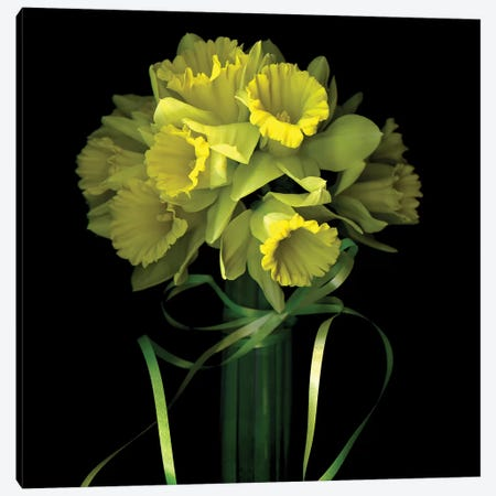 Yellow Daffodil And Ribbon I Canvas Print #MAG225} by Magda Indigo Canvas Print