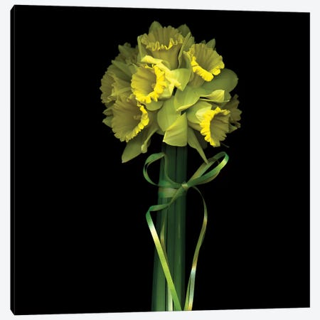 Yellow Daffodil And Ribbon II Canvas Print #MAG226} by Magda Indigo Art Print