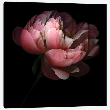 Creativity Is A Very Delicate Flower Canvas Print #MAG22} by Magda Indigo Canvas Wall Art